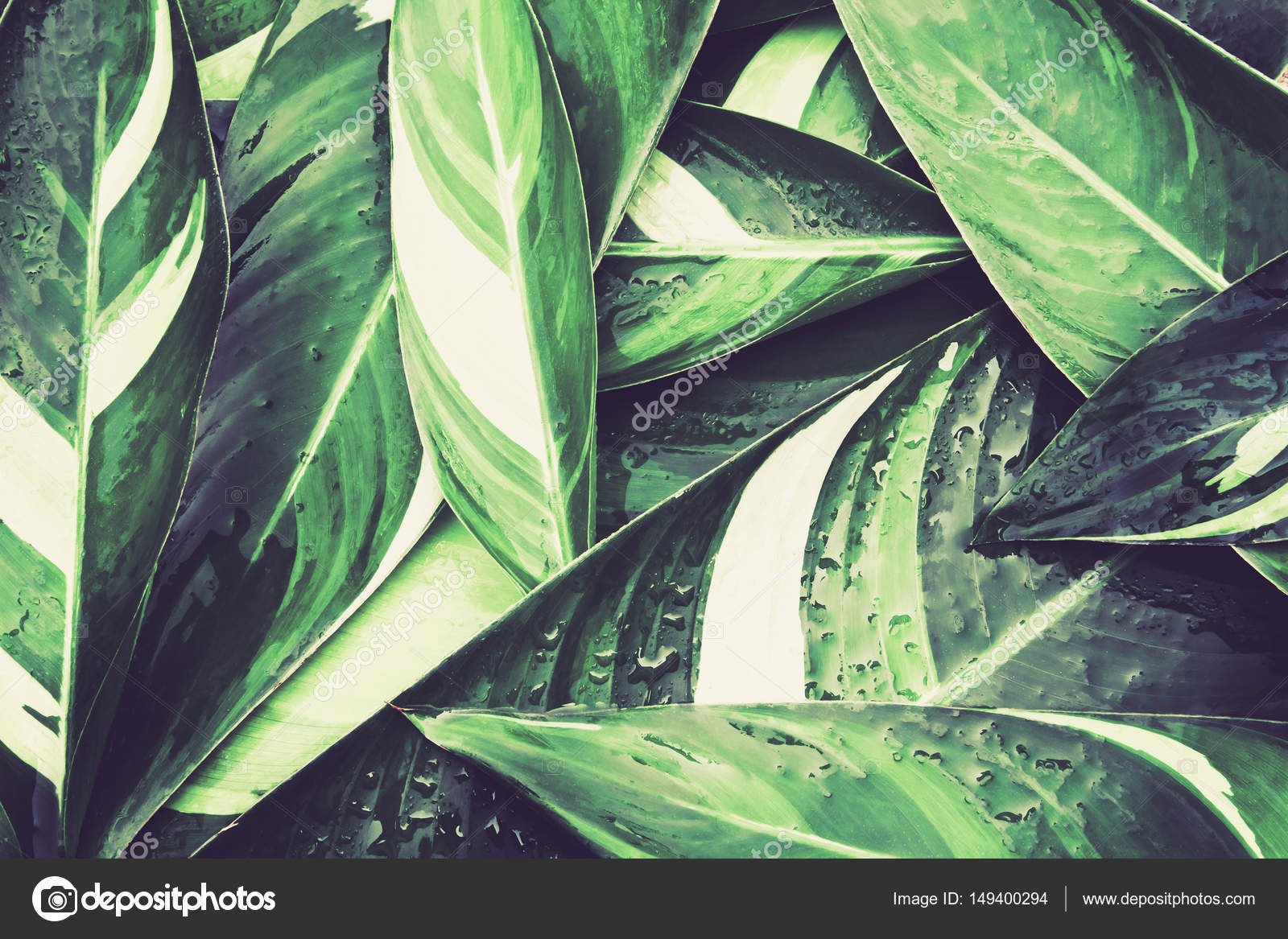 Wet Fresh Tropical Green Leaves Background Vintage Color Tone Stock Photo C Photorista 149400294 Tons of awesome green tropical leaves wallpapers to download for free. https depositphotos com 149400294 stock photo wet fresh tropical green leaves html