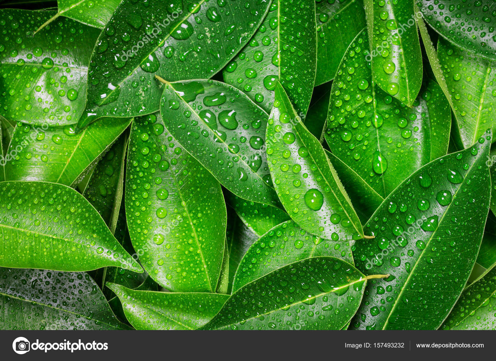 Wet Fresh Tropical Green Leaves Background Stock Photo C Photorista 157493232 Support us by sharing the content, upvoting wallpapers on the page or sending your own. https depositphotos com 157493232 stock photo wet fresh tropical green leaves html