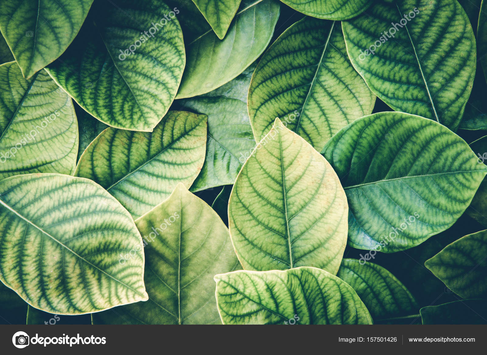 The Fresh Tropical Green Leaves Background Retro Vintage Color Stock Photo C Photorista 157501426 Leaf tropical green alpha masked. https depositphotos com 157501426 stock photo the fresh tropical green leaves html
