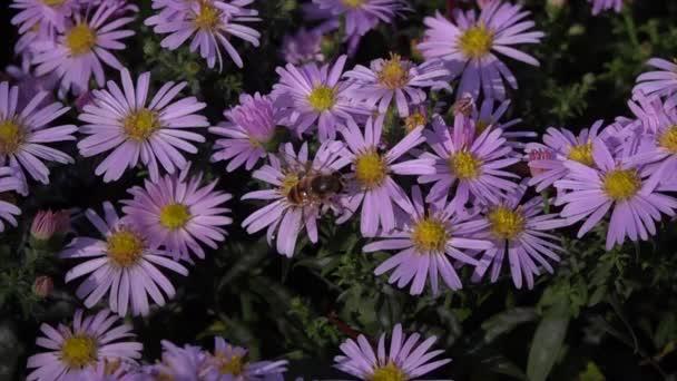 A méh lassan és sokat eszik a virágokból.