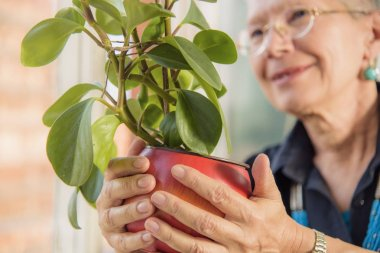 Retired gardener, senior woman watering plant