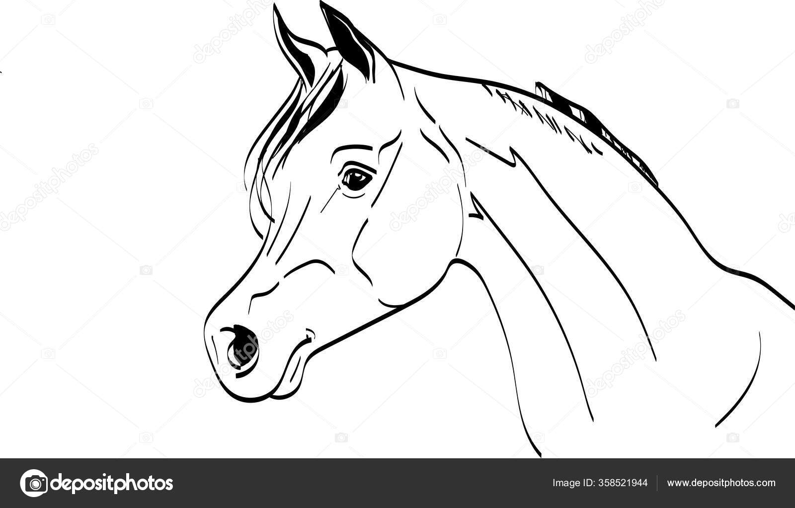 Horse Head Front Illustration