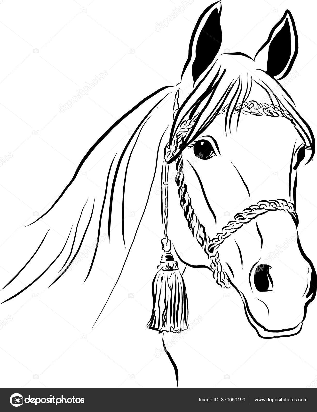 ᐈ Horse Face Drawing Stock Drawings Royalty Free Horse Face Front Animated Download On Depositphotos