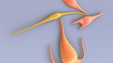 Dinoflagellates, plankton flagellate
