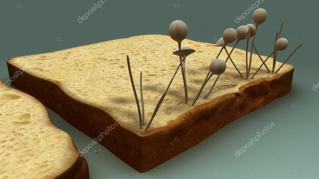 Фото: плесень на хлебе под микроскопом. Грибы, плесень на ...