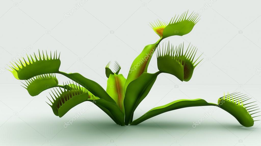 venus flytrap carnivorous plant � stock photo