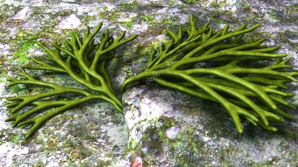 Resultado de imagen de alga verde