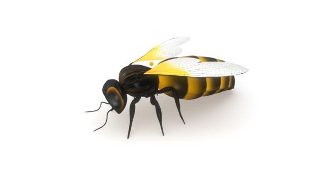 Honey bee hmyz