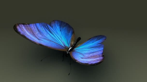 blue wings butterfly insect