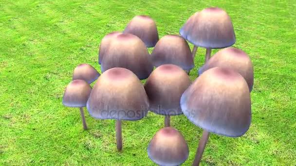 Muchomůrky houby, houby
