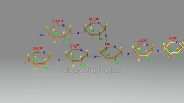 Amylopectin molecular structure