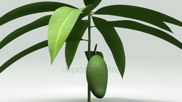 Mangifera, mango rostlin
