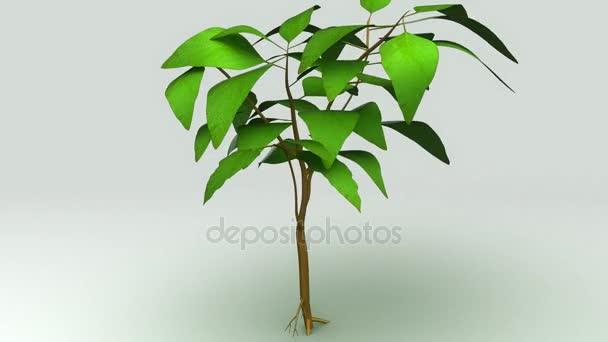 planta con raíz y hojas — Vídeos de Stock © sciencepics #130734520