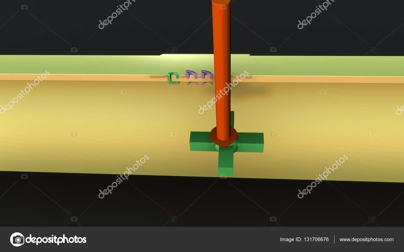 impulso nervioso humano Anatomía — Foto de stock © sciencepics ...