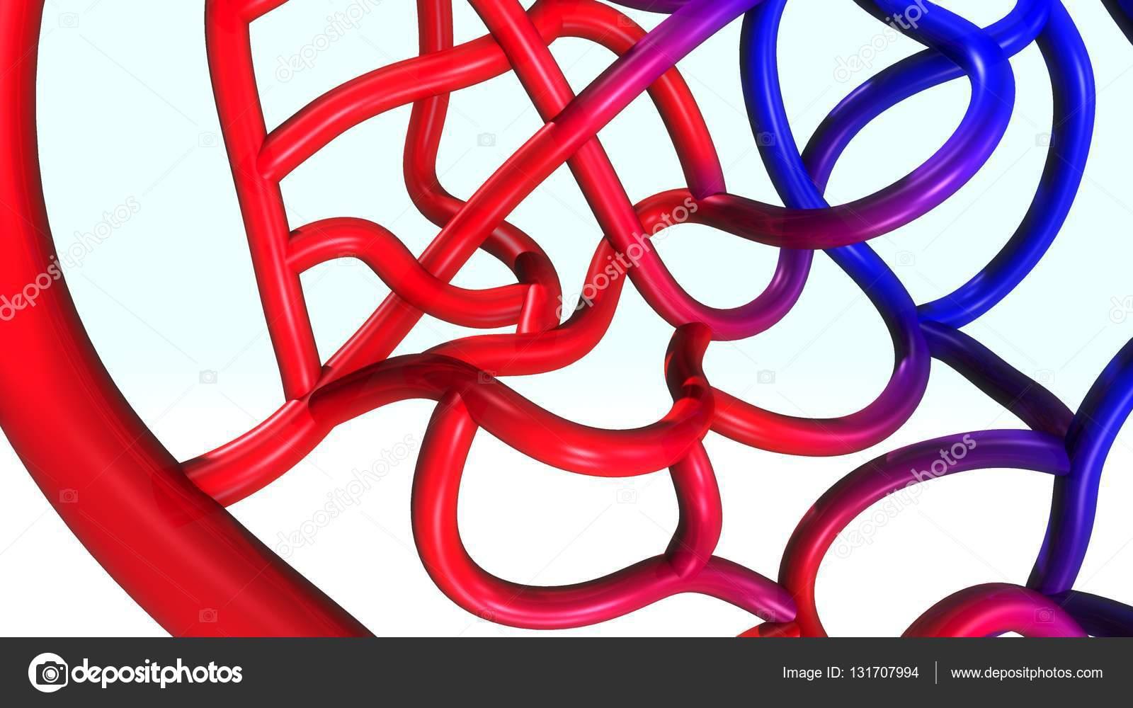 Ilustración de las arterias y venas — Fotos de Stock © sciencepics ...