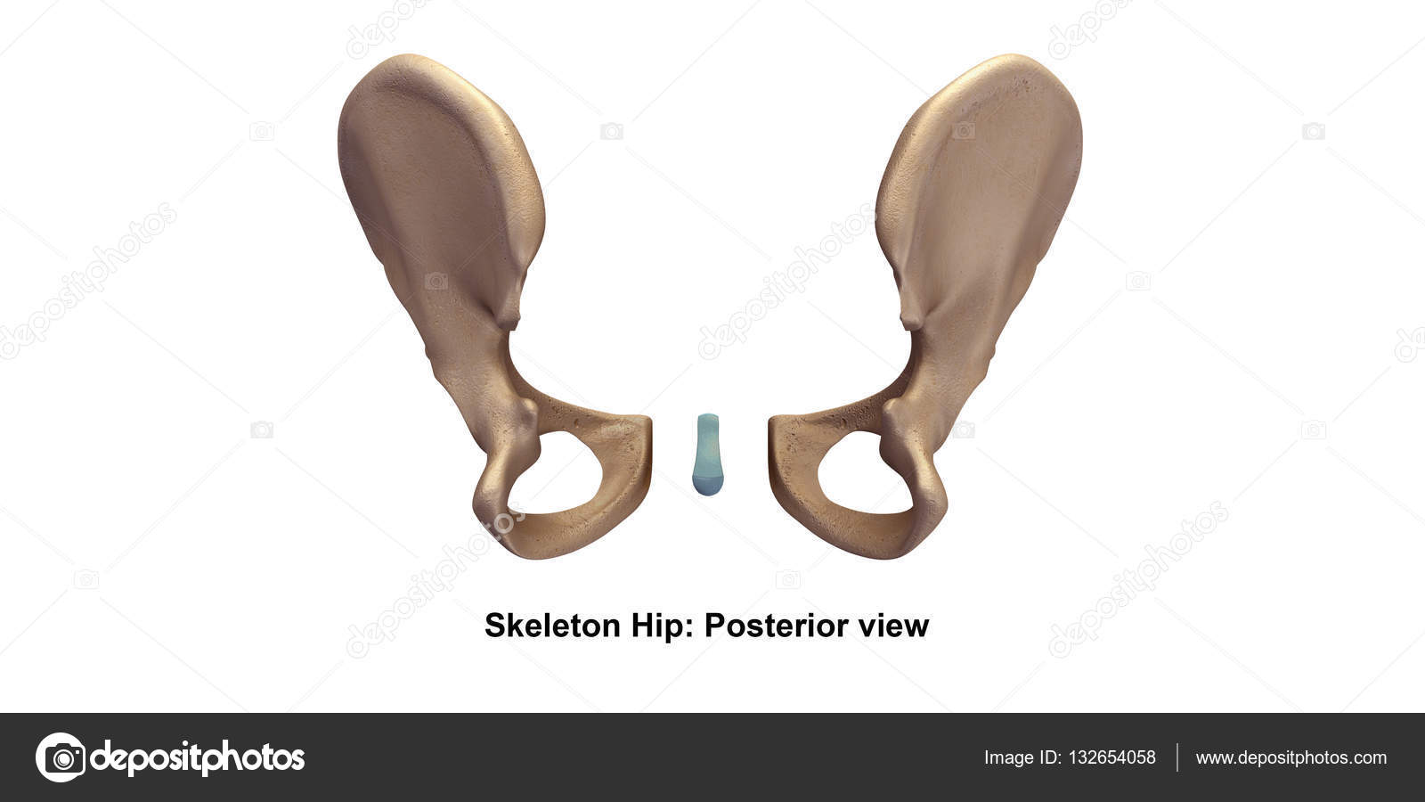 Skeleton Hip Illustration Stock Photo Sciencepics 132654058