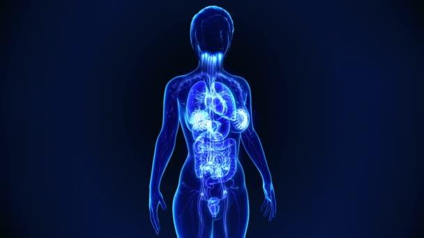 corpo femminile nel ciclo di scansione