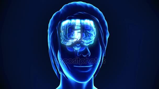 Animation des menschlichen Gehirns