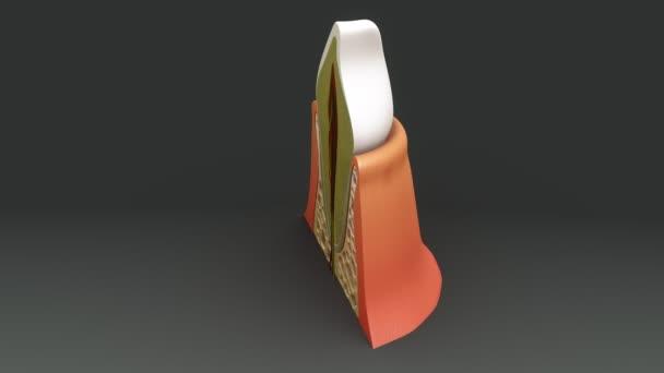 3D Anatomie-Konzept