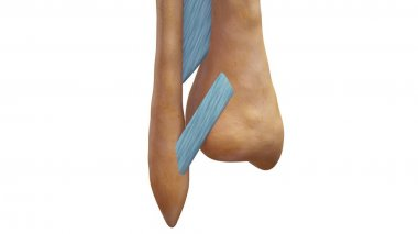 Fibrous Joints 3d illustration