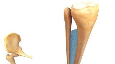 Fibrous Joints 3d illustration
