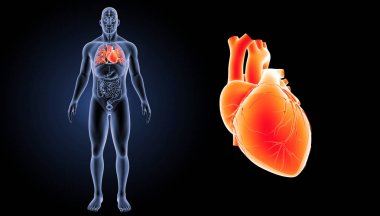 Human Heart View