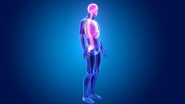 3D scheletro assiale