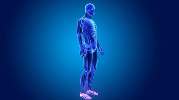 3D animace nohy