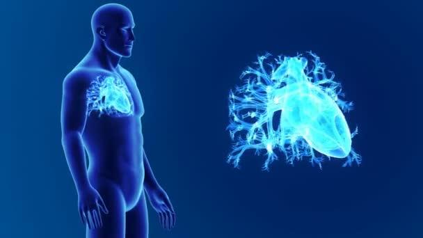3D Herz mit Anatomie — Stockvideo © sciencepics #153342086