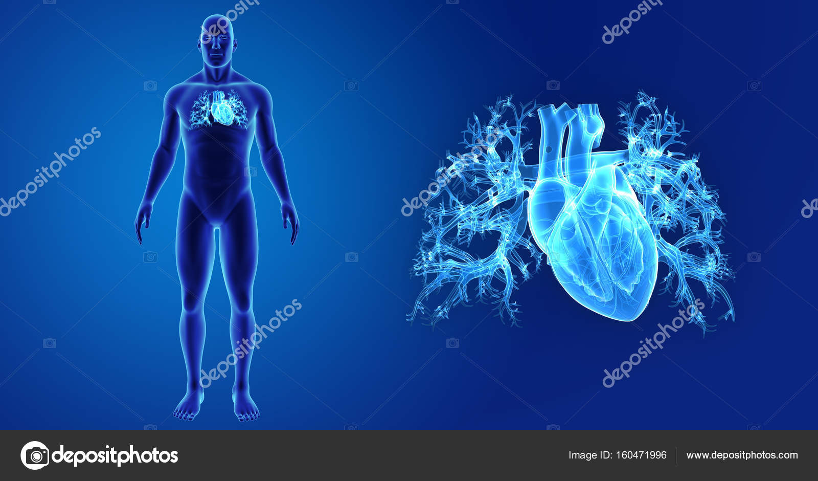 Zoom de corazón con el cuerpo — Foto de stock © sciencepics #160471996