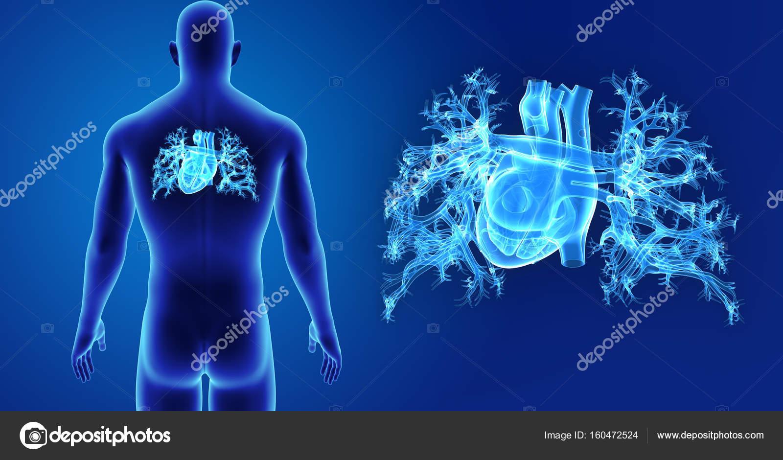 Zoom de corazón con el cuerpo — Foto de stock © sciencepics #160472524