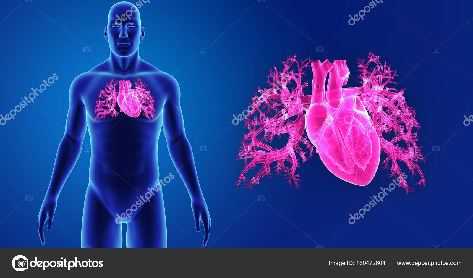 Zoom de corazón con el cuerpo — Foto de stock © sciencepics #160472604