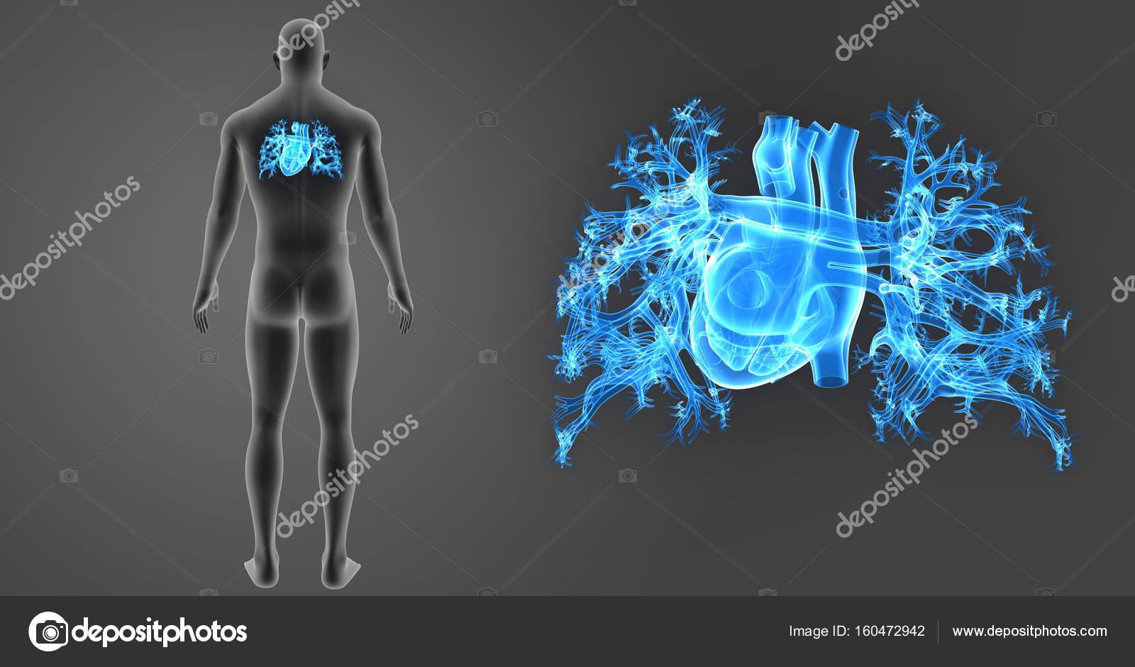 Zoom de corazón con el cuerpo — Fotos de Stock © sciencepics #160472942