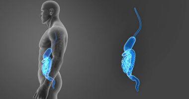 Stomach and intestine zoom