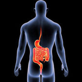 Stomach and intestine with body