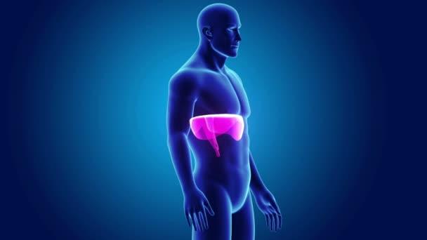 3D membrána s anatomie