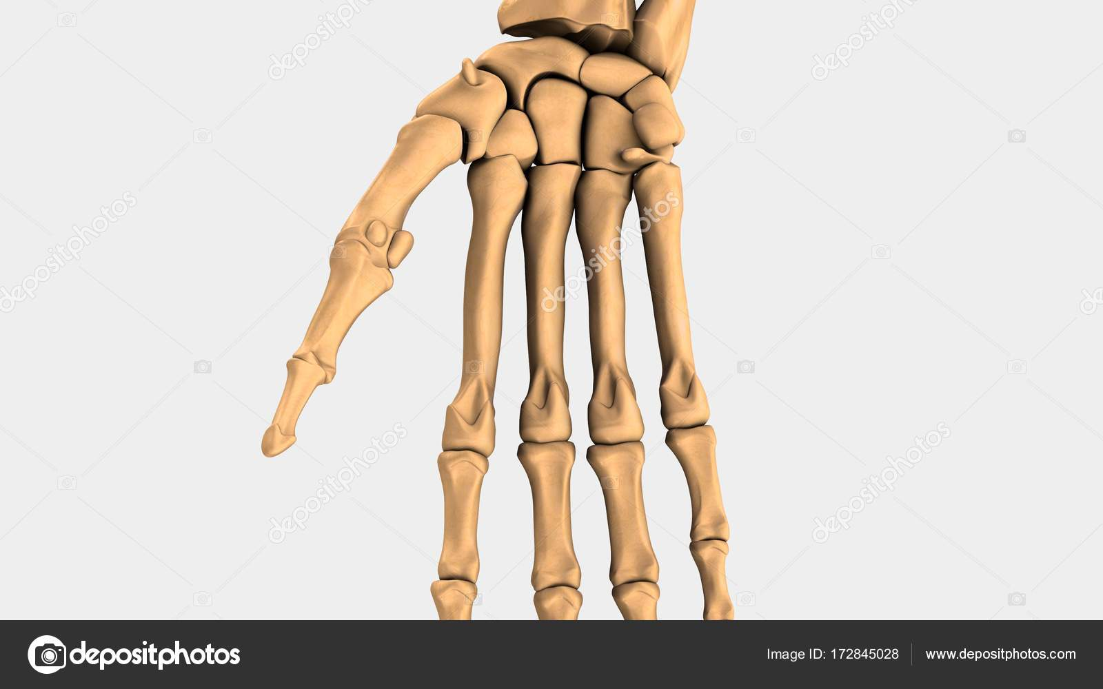 Human Wrist Bones Stock Photo Sciencepics 172845028
