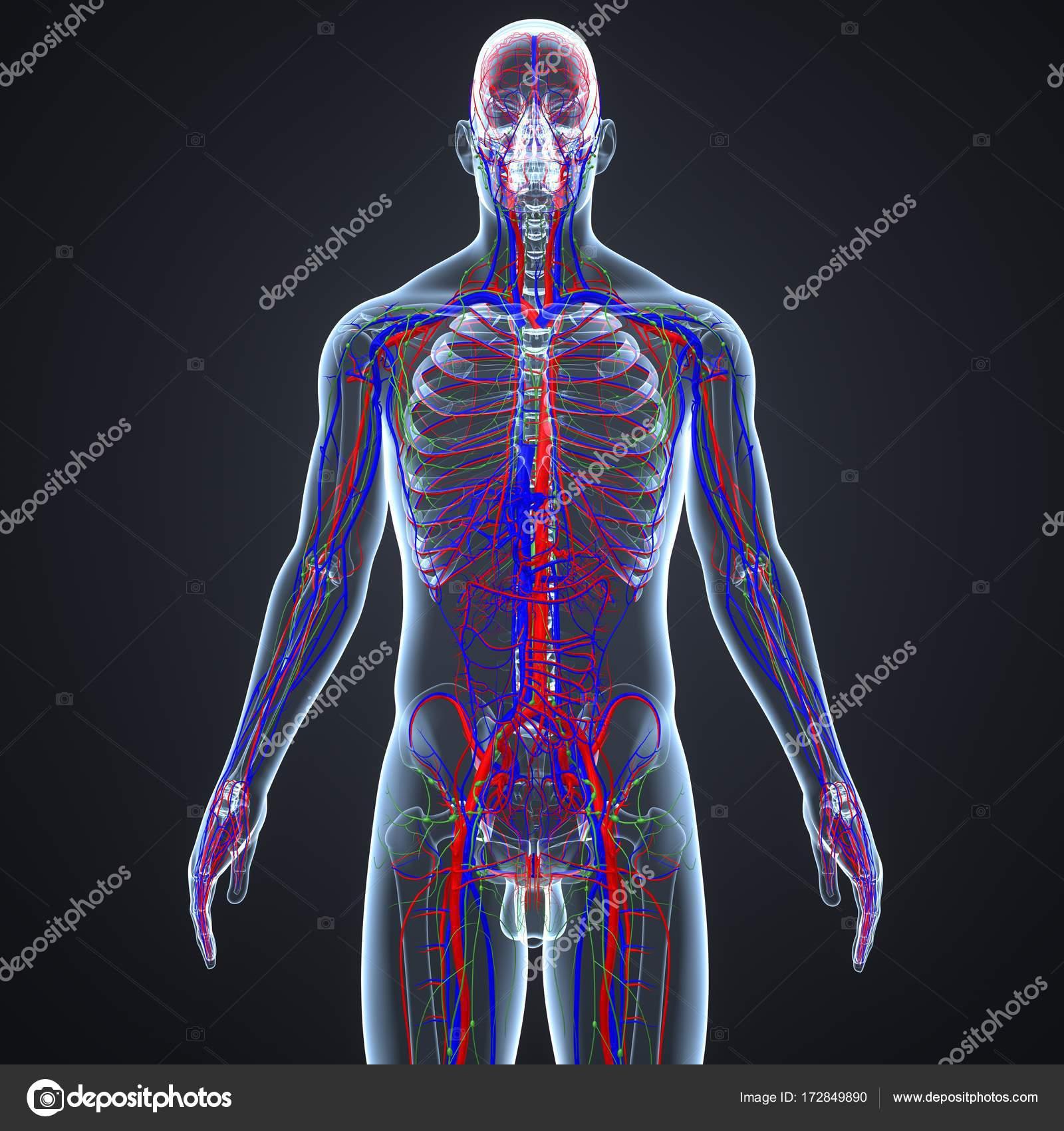 lymfkörtlar i magen
