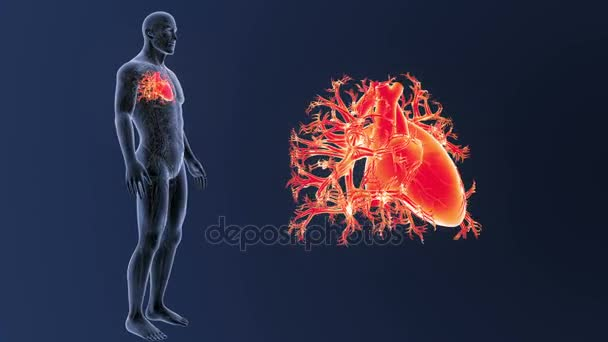 Skelett Hintere Ansicht Des Menschlichen Herzens Out Body Auf Blauem ...