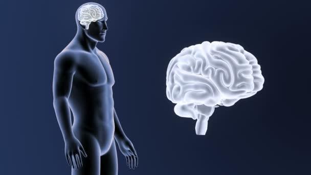 Human brain system view 3d illustration on dark background