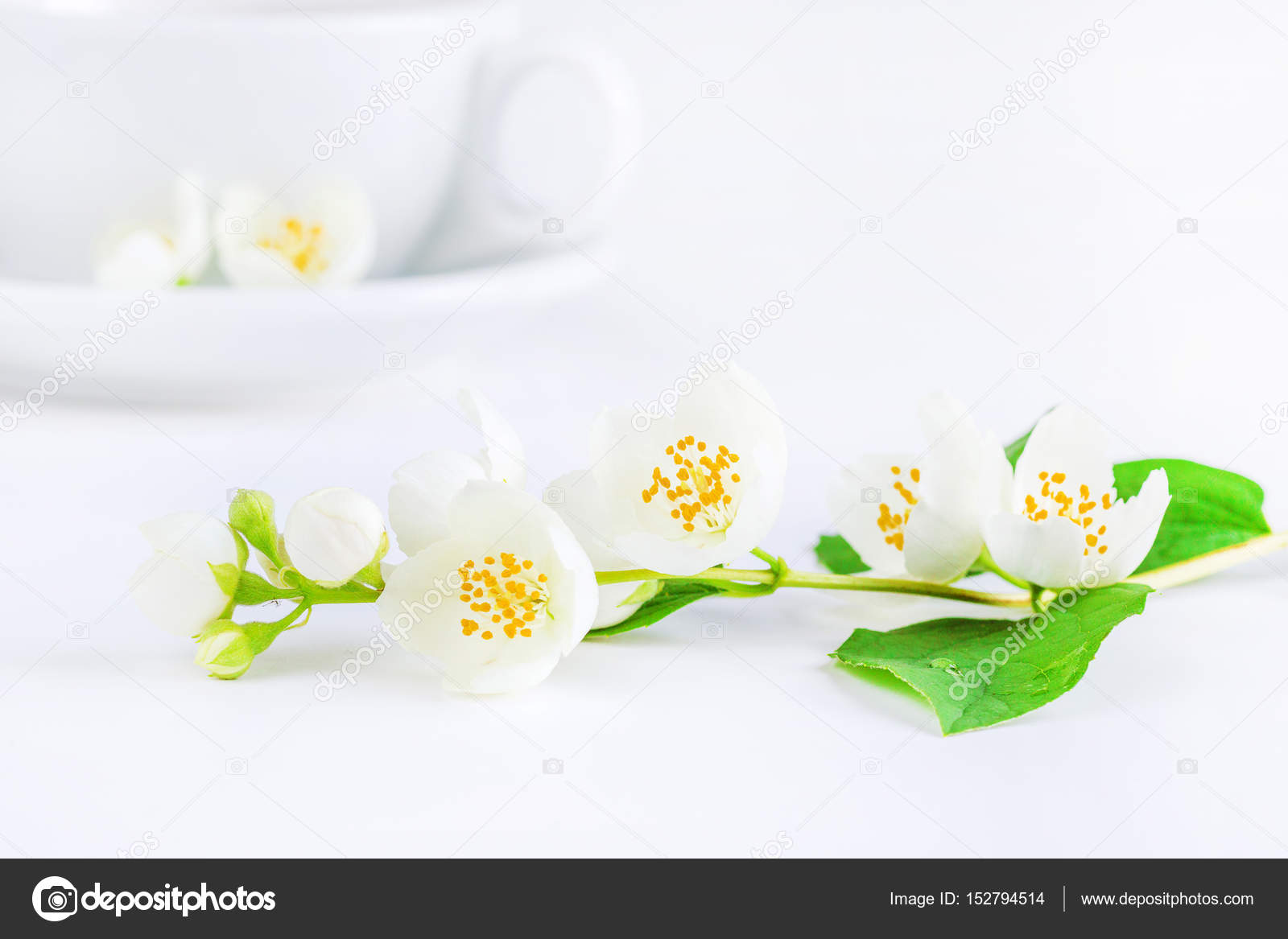 Tea And Jasmine Flowers Stock Photo Arcadi1962 152794514