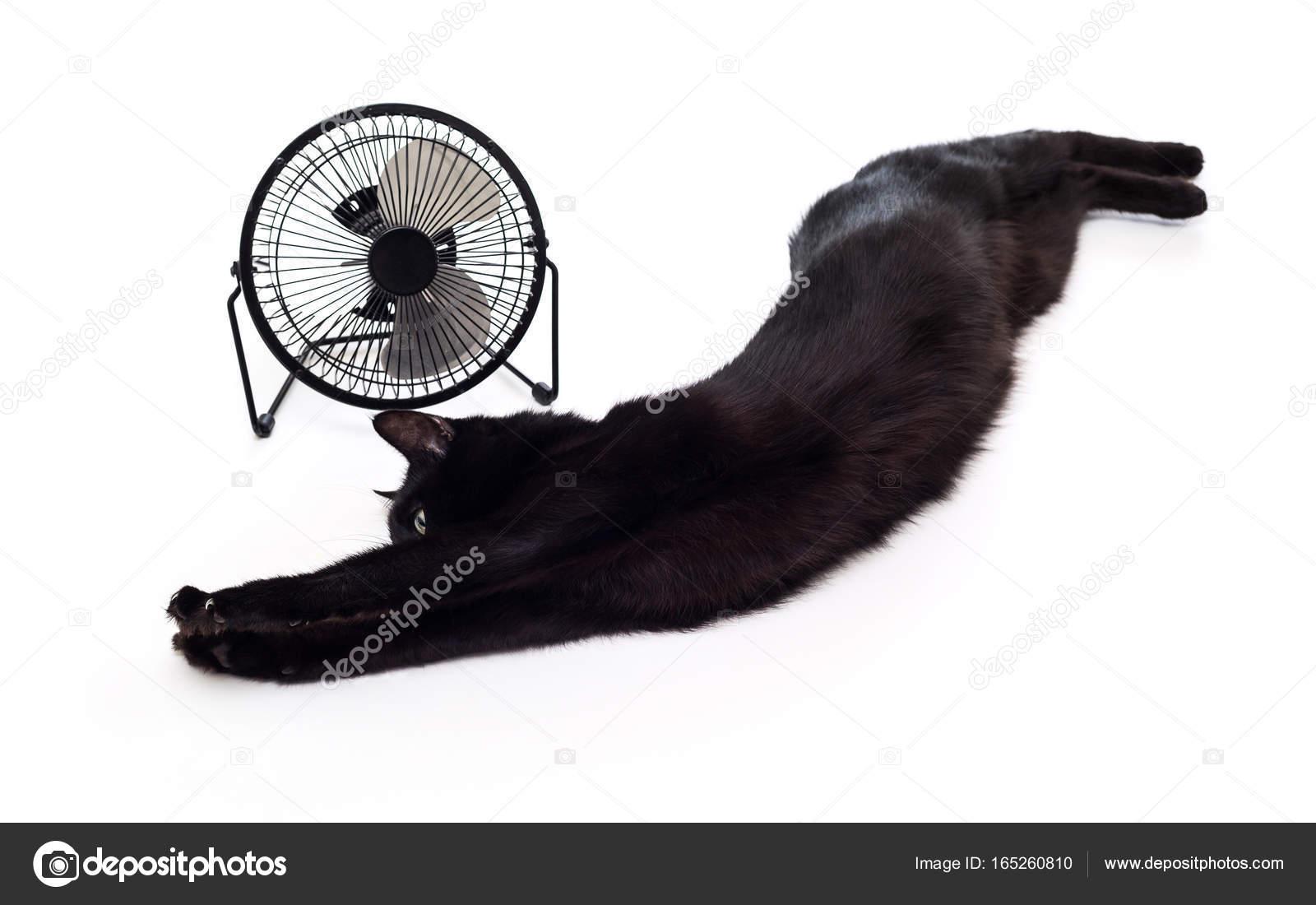 Černá kočička v kanceláři