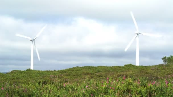 ecology power wind plant