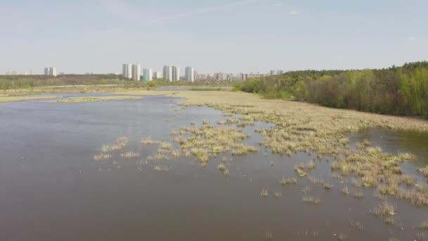 ptáci létají a hnízdí v rákosí. jezero na jaře .birds a jejich reprodukci.