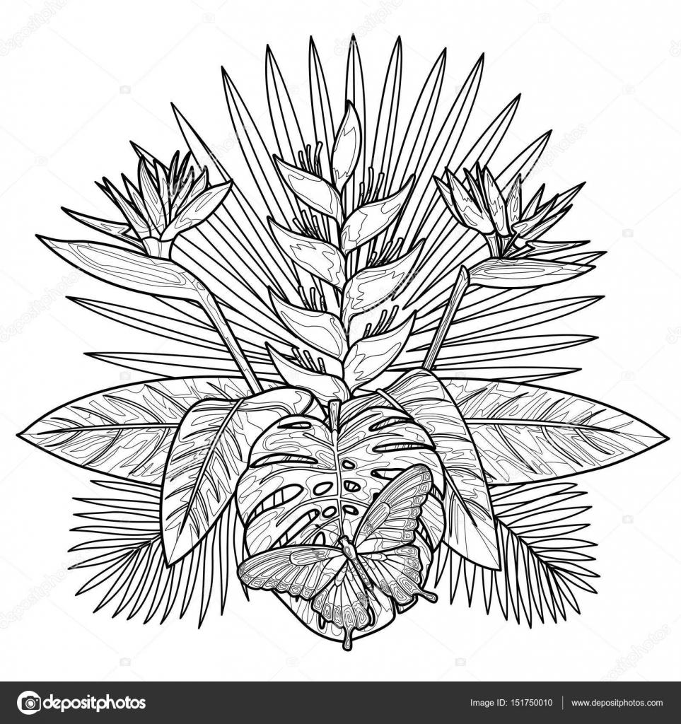 Página para colorear de aroma tropical — Archivo Imágenes ...