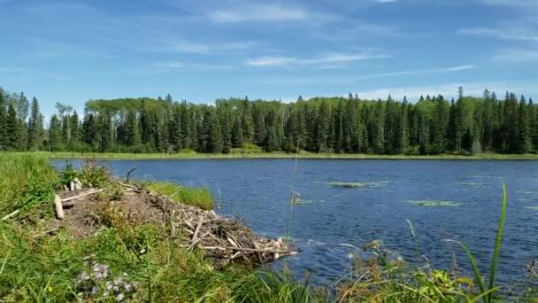 Hickey Lake Beaver Dam on a Windy sunny day at Duck Mountain Provincial Park, Manitoba, Canada