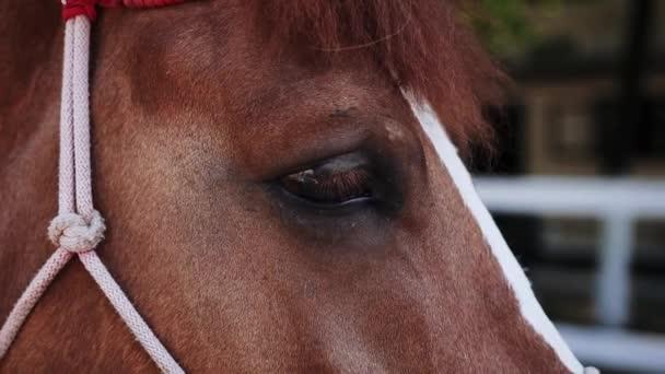 Detailní záběr hnědých koňských očí