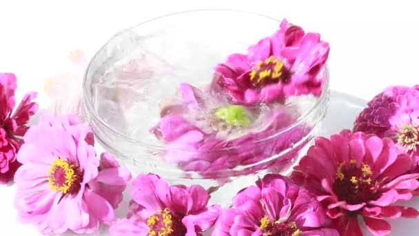 Zinnia flowers in a cup of water