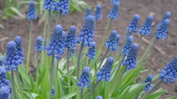 Beautiful blue flowers in the park