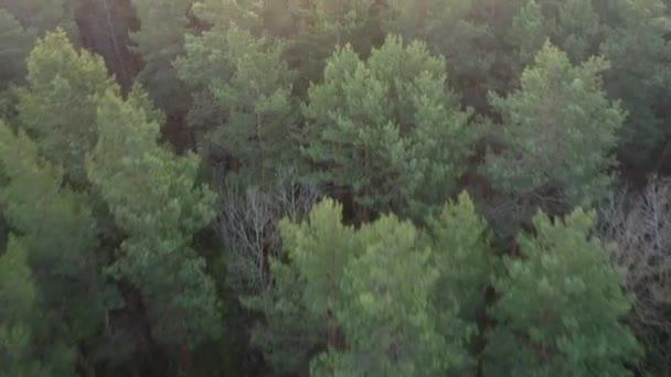 Egy európai erdő felett repül. Fehéroroszország.Gyönyörű erdők Fehéroroszország